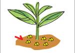 biogold-dawkowanie