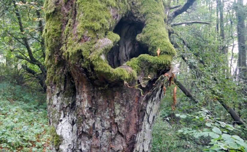 Uro, czyli dziury w drzewie