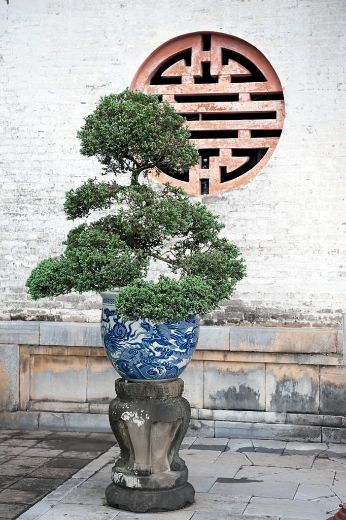 Bonsai w rogu jednej ze światyń w Wietnamie