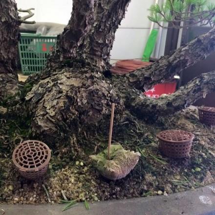 koszyczki-do-bonsai-na-roslinie