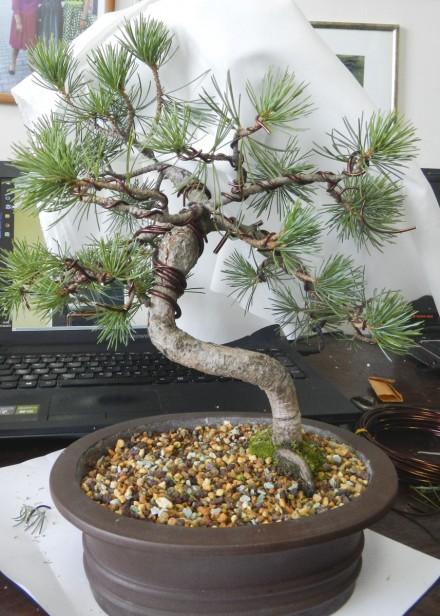 Symulacja wyglądu bonsai po odcięciu danej gałęzi