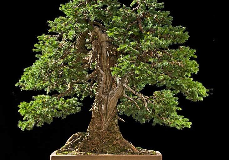 Moje najukochańsze bonsai – Walter Pall