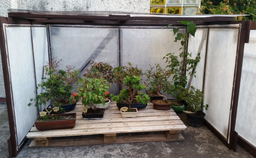 Zimowanie bonsai zewnętrznych – inspekt