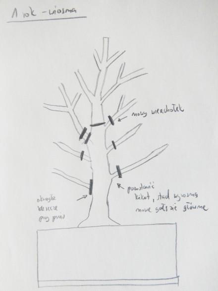 Pierwsze bonsai - 1 rok - wiosna