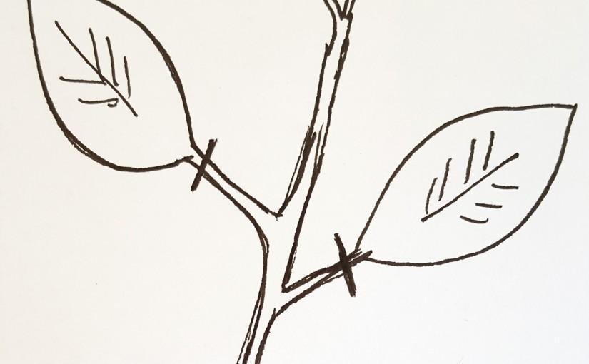 Defoliacja oraz cięcie liści
