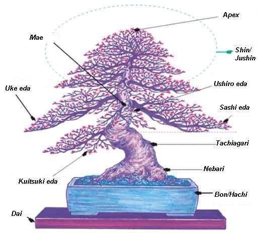Japońskie pojęcia związane z budową drzewka bonsai
