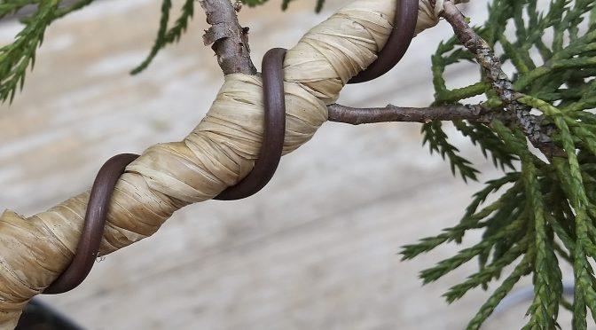 Częste błędy podczas drutowania bonsai