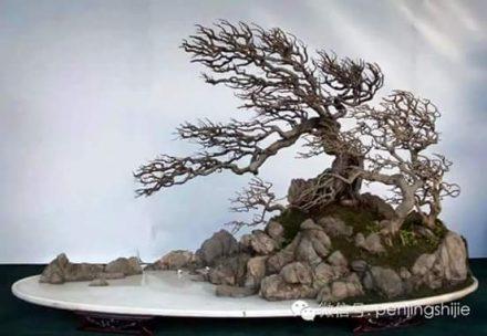 styl-smagany-wiatrem-bonsai