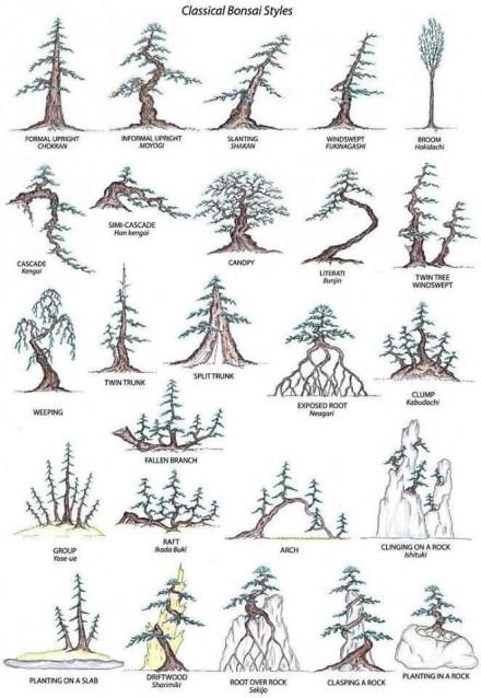 Style bonsai (źródło: Pinterest)