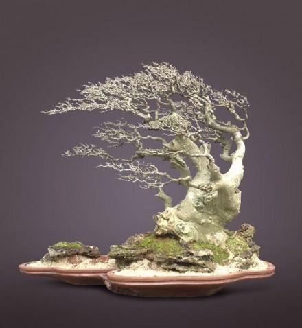 Style bonsai - Fukinagashi - drzewo ukształtowane przez wiatr