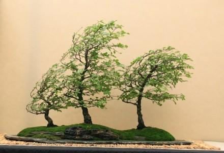 Grupowo nasadzone drzewka smagane mocnym wiatrem.