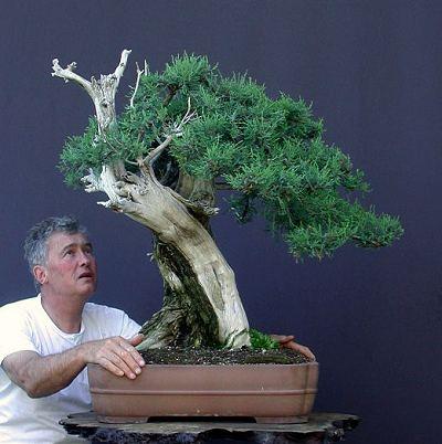 Walter Pall z pozyskanym z natury jałowcem