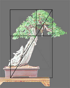 Złoty podział w bonsai