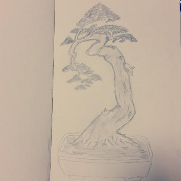 Szkic rysunek bonsai ołówkiem