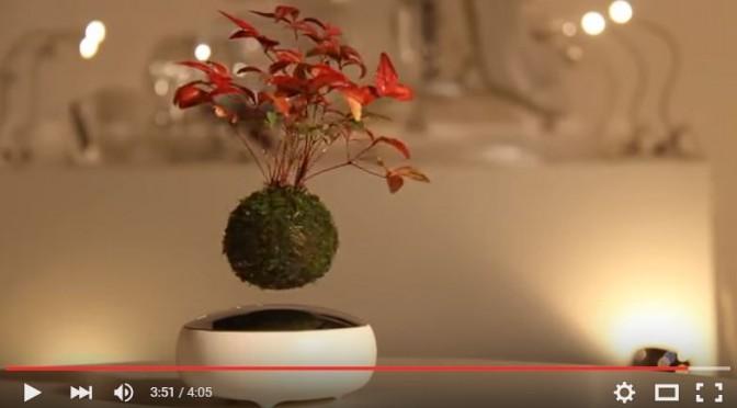 Bonsai unoszące się w powietrzu