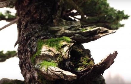 Mech na jinach i martwym drewnie wygląda bardzo natuuralnie.