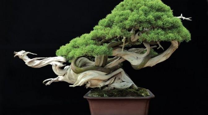 Doskonalenie bonsai