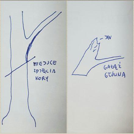 odkłady-na-bonsai