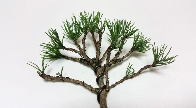 Kolejny zjazd w szkole bonsai