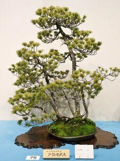 styl-bonsai-Yamayori-yamayose