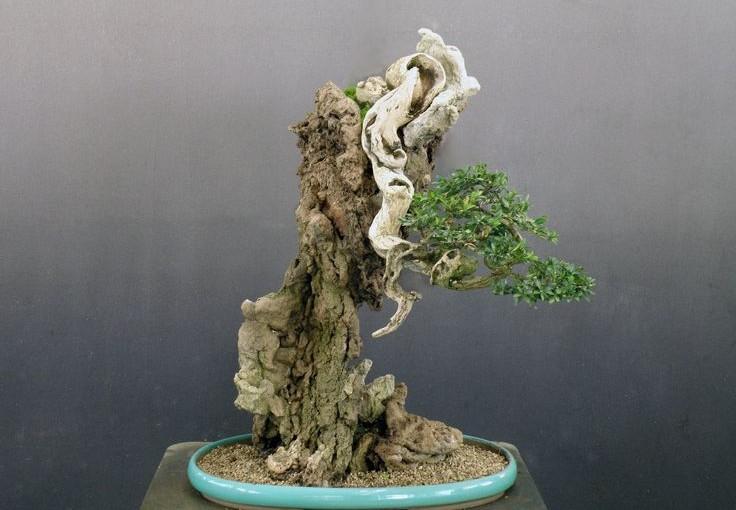 Styl Ishizuke – drzewo rosnące na skale