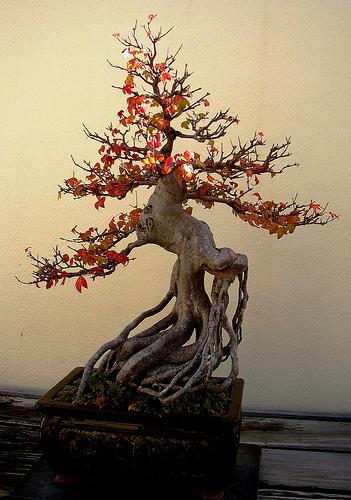 styl-neagari-drzewo-stojace-na-korzeniach-wyeskponowane-korzenie