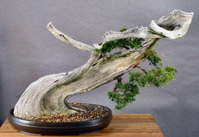 Tanuki – połączenie martwego drewna i żywego drzewa