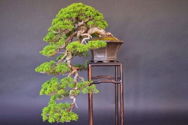 Styl taki-kengai - gałęzie imitują wodospad