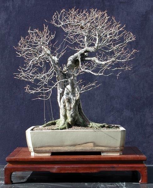 yamadori-pobieranie-drzewek-z-natury-2