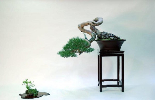 bonsai-kusamono