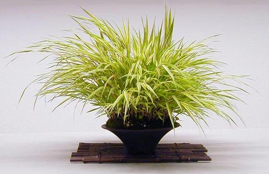 Z jakich roślin zrobić kusamono / shitakusa?