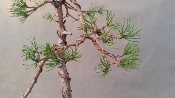 szkola-bonsai-02