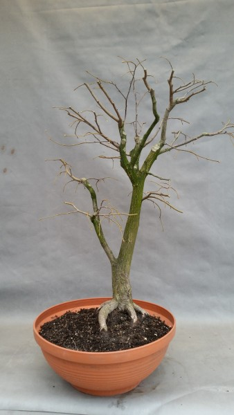 szkola-bonsai-04