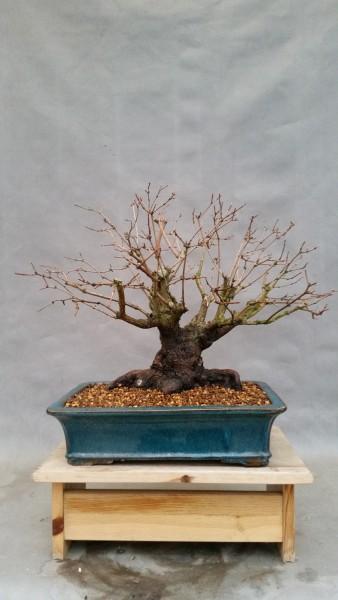 szkola-bonsai-07