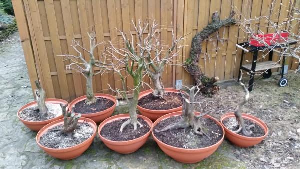 szkola-bonsai-08