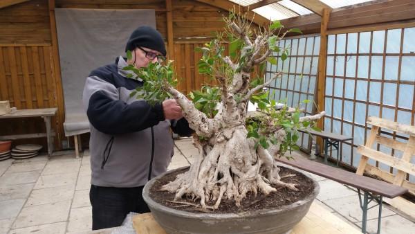 szkola-bonsai-09