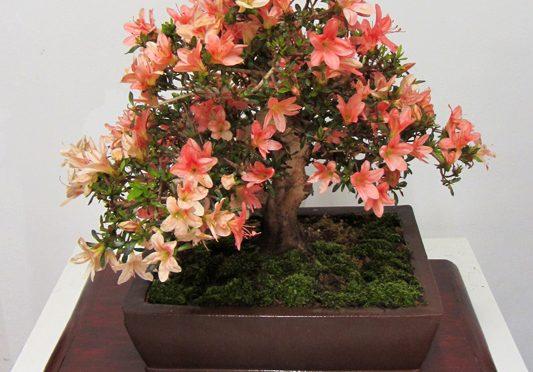 Obniżenie pH i zakwaszanie wody do podlewania bonsai
