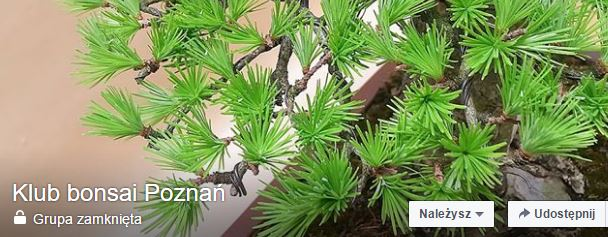 Klub bonsai w Poznaniu?