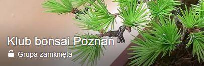 Klub bonsai Poznań