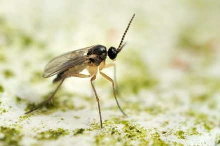 Dorosły owad