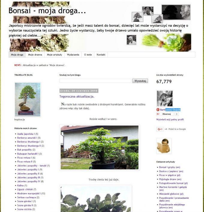 bonsai-moja-droga