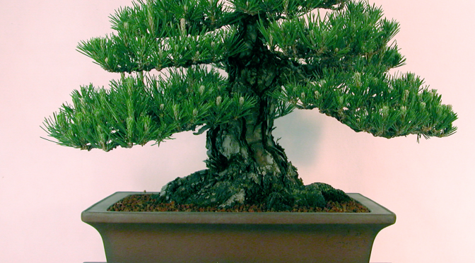 Quiz bonsai [2]