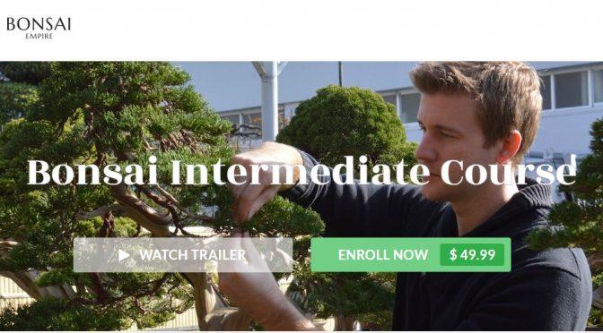 Kurs bonsai dla średniozaawansowanych Bjorna Bjorholma