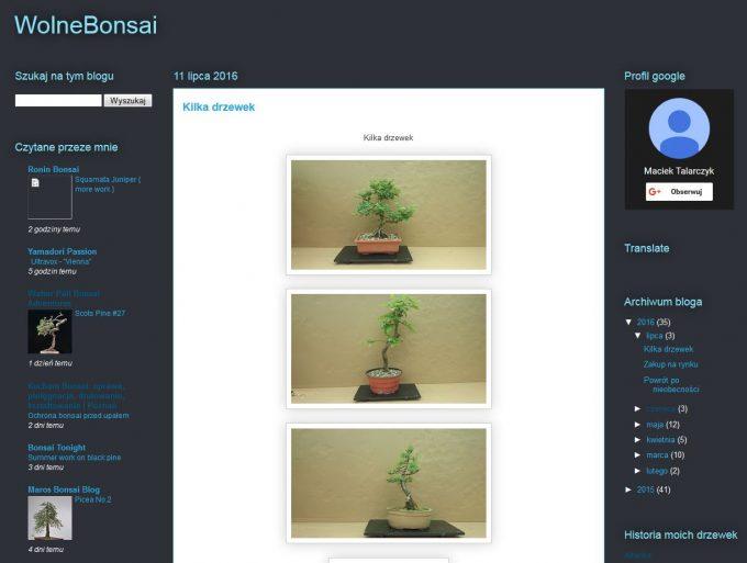 wolne-bonsai