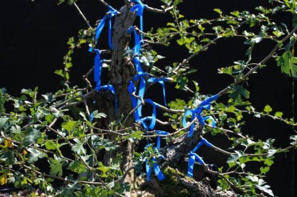 Drzewo po robocie