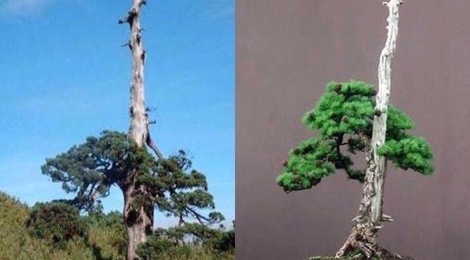 Naturalne inspiracje dla bonsai