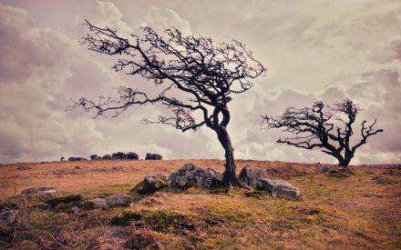 drzewo-w-stylu-wiatrowym-w-naturze