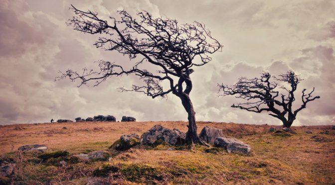 Czy i jak zacząć przygodę z bonsai?