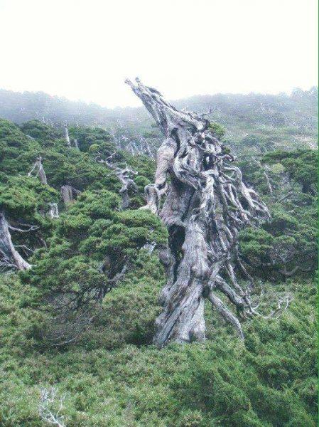 inspiracje-do-bonsai-z-natury
