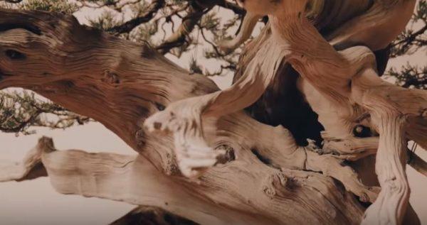 martwe-drewno-jin-shari-sabamiki